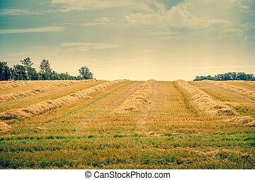 Hay on a countryside field