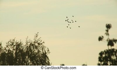 Birds fly - Many brids in the sky
