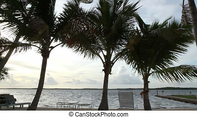 Florida Keys Ocean and Palm trees - Florida Keys ocean and...