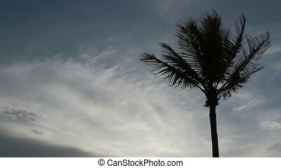 Palm tree and clouds time lapse