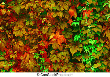 Bright colors - Natural background: leaves of bright colors