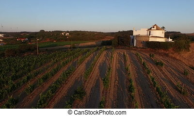 Wine fields in portugal - Aerial from wine fields in...