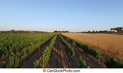 Wine and wheat fields in Portugal - Aerial from wine and...