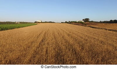 Aerial from wheat fields Portugal - Aerial from wheat fields...