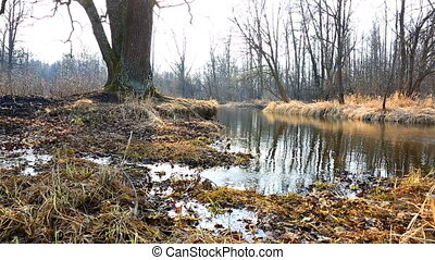 Spring tide and dry grass in forest
