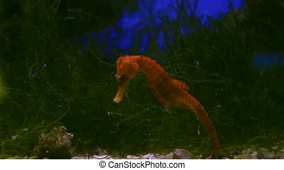 Seahorse is small marine fishes in genus Hippocampus. -...