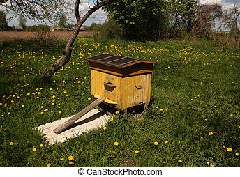 Bee hive in spring.