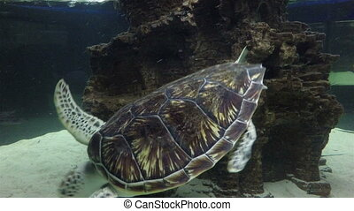 Sea turtle in the beautifully decorated Marine Aquarium.