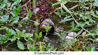 snail slides across 4k
