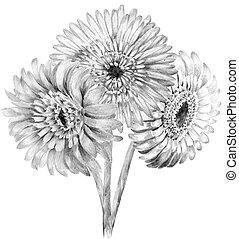 Bouquet, croquis, fleur