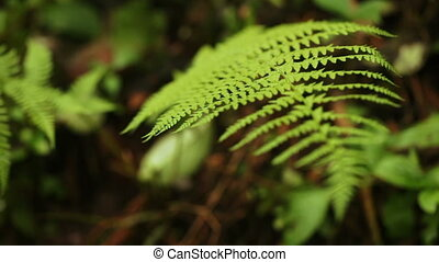 Fern leaves in botanic garden