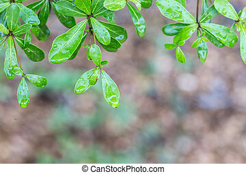tree leaves with water drops