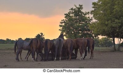 Horses in ranch paddock - Herd of horses on animal farm...