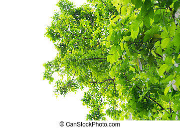 Green forest tree