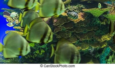 Aquarium with exotic fish .
