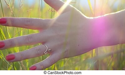 woman's hand touching golden grass with sun rays on summer...