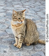 Cat - This is a photo of grey cat