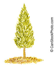 Watercolor Arborvitae Tree, Hand Drawn and Painted, Isolated on White