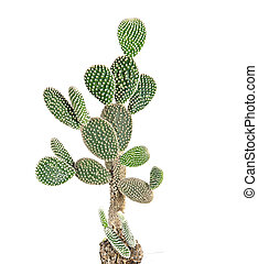 Cactus on white backgraund