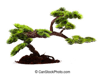 Bonsai - Small tree in traditional Japanese style bonsai