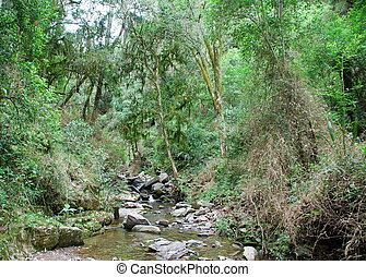 Stream in tropical forest - Yerbal stream in tropical...