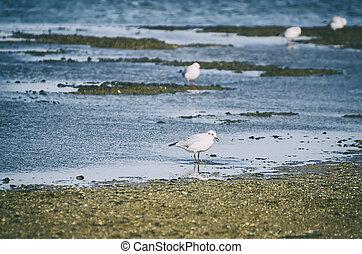 Sea gull - Single sea gull at the liman coast, natural...
