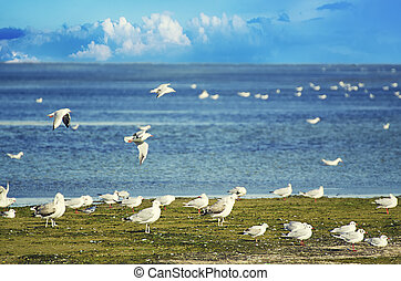 Sea gulls - A lot of sea gulls at the liman coast, natural...