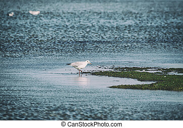 Sea gull - Single sea gull at the liman coast, natural...