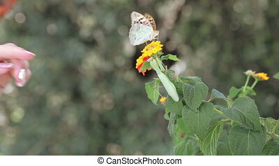 Butterfly and mantis - Bush sits on branch and praying...