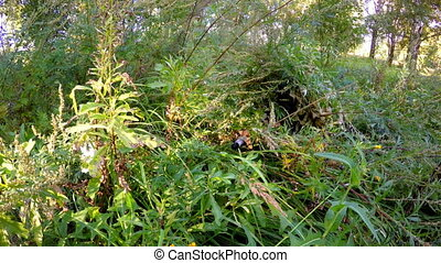 sniper with a gun camouflaged in the grass in forest...