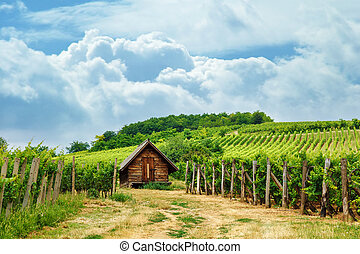 Wooden press house in vineyard - Wooden press house in old...
