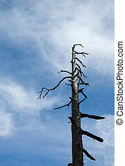 Ominous tree - A lone ominous looking tree against a blue...