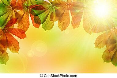 Autumn leaves of chestnut tree Aesculus hippocastanum