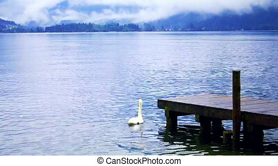 Europe lake, swan and mountian - beautiful calm cloudy lake...