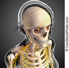 Nervous system of female head skeleton artwork