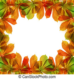 Frame from autumn leaves of chestnut tree Aesculus...