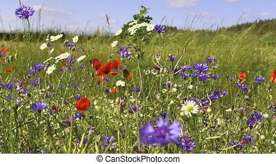 wild flowers - different blossoming wild flowers at the...