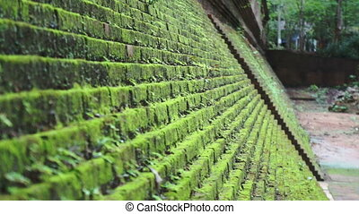 Green moss on step brick walls - Video of Green moss on step...