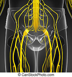 Male nervous system artwork - Illustration of Male nervous...