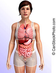 digestive system artwork - 3d rendered illustration of...