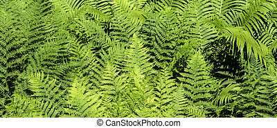 beautiful green fern - detail of beautiful green fern in...