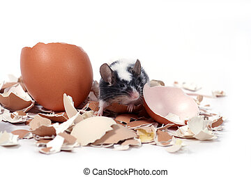mouse in broken eggshells - little mouse in broken eggshells