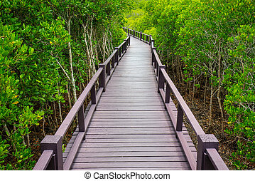 Wooden bridge to the jungle,Prachuap Khiri Khan,Thailand