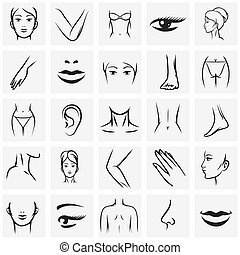Female body parts icons set. Femininity fashion contour...