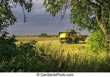 Harvest, fields and meadows during harvest - cultivation of...