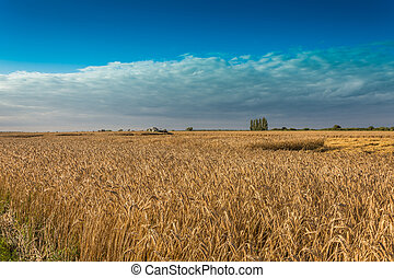 Fields and meadows during harvest - cultivation of food...
