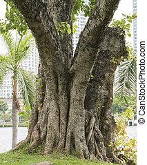 Big tree at the park 2
