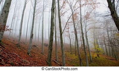 Trees smothered in fog in the forest