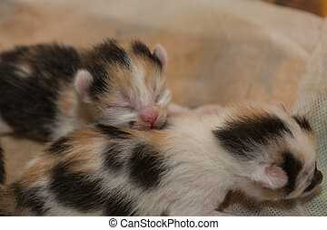 two kittens - young cats with eyes still closed