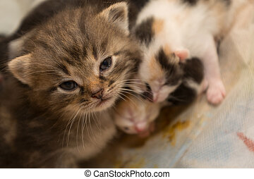 different kittens - several kittens seek help